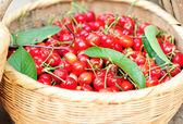 Cherry fruits — Stock Photo