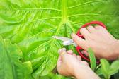 Gardening in farm — Foto de Stock