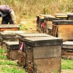 Beekeeping farm — Stock Photo #42458425