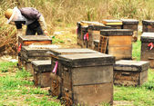Beekeeping farm — Stock Photo