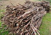 Sugarcane harvest — Stock Photo
