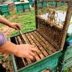 Beekeeping — Stock Photo #43927295