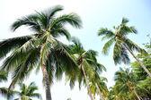 Nice palm trees — Stock Photo