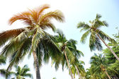 Nice palm trees — Stock Photo