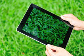 Woman use digital tablet sit on grass — Stock fotografie