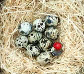 Quail eggs lie on straw — Stock Photo
