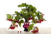 Viburnum twigs in a glass vase — Stock Photo