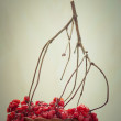 Stock Photo: Red berries of viburnum in basket on wooden chair. toned photogr