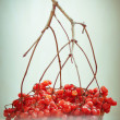 Stock Photo: Autumn still life with red berries. toned photograph