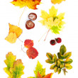Fall leaves. Autumn leaves of maple — Stock Photo #24340665