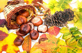 Autumn leaves backgrounds — Stock Photo