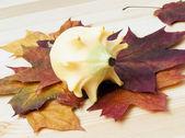 Natura morta autunnale (foglie secche, zucca decorativa) — Foto Stock