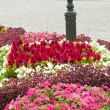 Multicolored flowerbed on a lawn — Stockfoto #32999673
