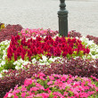 Multicolored flowerbed on a lawn — ストック写真 #32999673