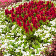 Foto Stock: Multicolored flowerbed on a lawn
