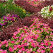 Multicolored flowerbed on a lawn — Stockfoto #32999709