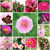 Set van bloemen in de tuin — Stockfoto