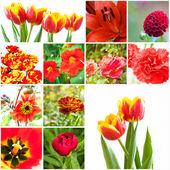 Set van bloemen — Stockfoto