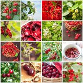 Collage with different berries — Photo
