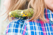 Parrot on the shoulder of the child — Stock Photo