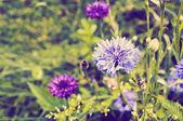 Flores do prado — Foto Stock