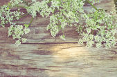 Summer white flowers on vintage wooden background  — Stock Photo