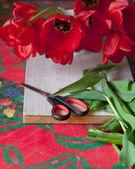 Nożyczki i cięte tulipany — Zdjęcie stockowe