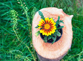 Bright flower in a pot on a tree stump — Stock Photo