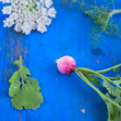Radish, dill, leaf and flower on the blue board — Stock Photo #26242489