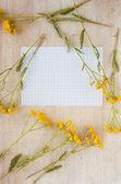 野生の花や書き込みのための長方形の紙のフレーム — ストック写真