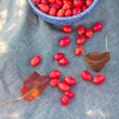 Stock Photo: Autumnal red berrys hips