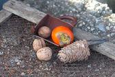 Ebony, walnut, fir cone — Stock Photo