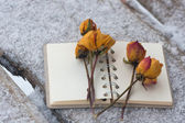 Several dry yellow roses on the notebook — Stok fotoğraf
