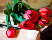 Ramo de tulipanes rojos — Foto de Stock
