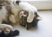 Cat sleeps on the windowsill put her paw — Stock Photo