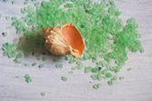 Beautiful sea shell — Stock Photo