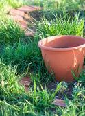 Flower pot of green beds  — Photo