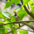 Bird with orange beak on a tree branch — Stock Photo #46528059