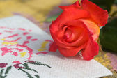 Rose flower close up and canvas  — Stock Photo