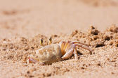 Crab on the beach sand — Stock Photo