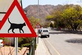 Triangular road sign warning cats are crossing — Zdjęcie stockowe
