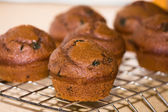 Freshly baked Choc-mint muffins — Stock Photo