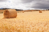 Hay bales laying in field under stormy skies — Stockfoto
