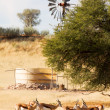 Herd of springbuck standing near waterhole — Stock Photo