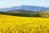 Agricultural land overlooking snow capped mountain range — 图库照片