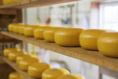 Rows of cheese maturing in factory — Stock Photo