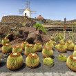 View of cactus garden, jardin de cactus in Guatiza, Lanzarote, Canary Islands - Stock Photo