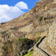 Stone road between empty vineyards during winter season, Valtellina - Stock fotografie
