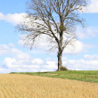 Spring landscape, lonely tree and blue sky, France — Stock Photo #22537467