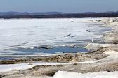 Måsen på packa ihop av en frusen sjö — Stockfoto